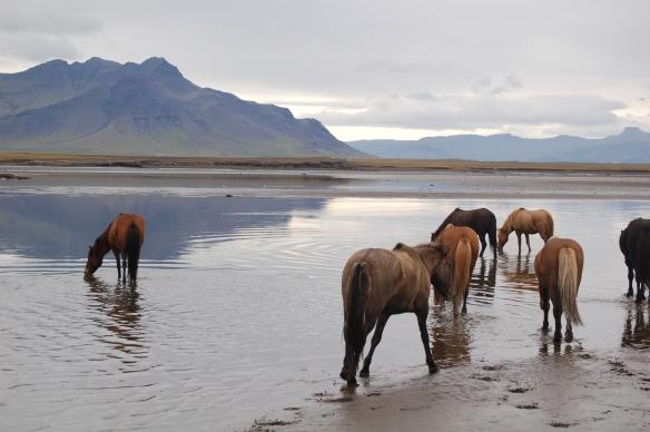 Iceland 378